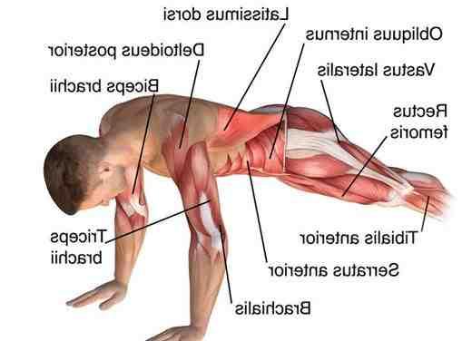 Quels muscles travaillent avec les squats ?