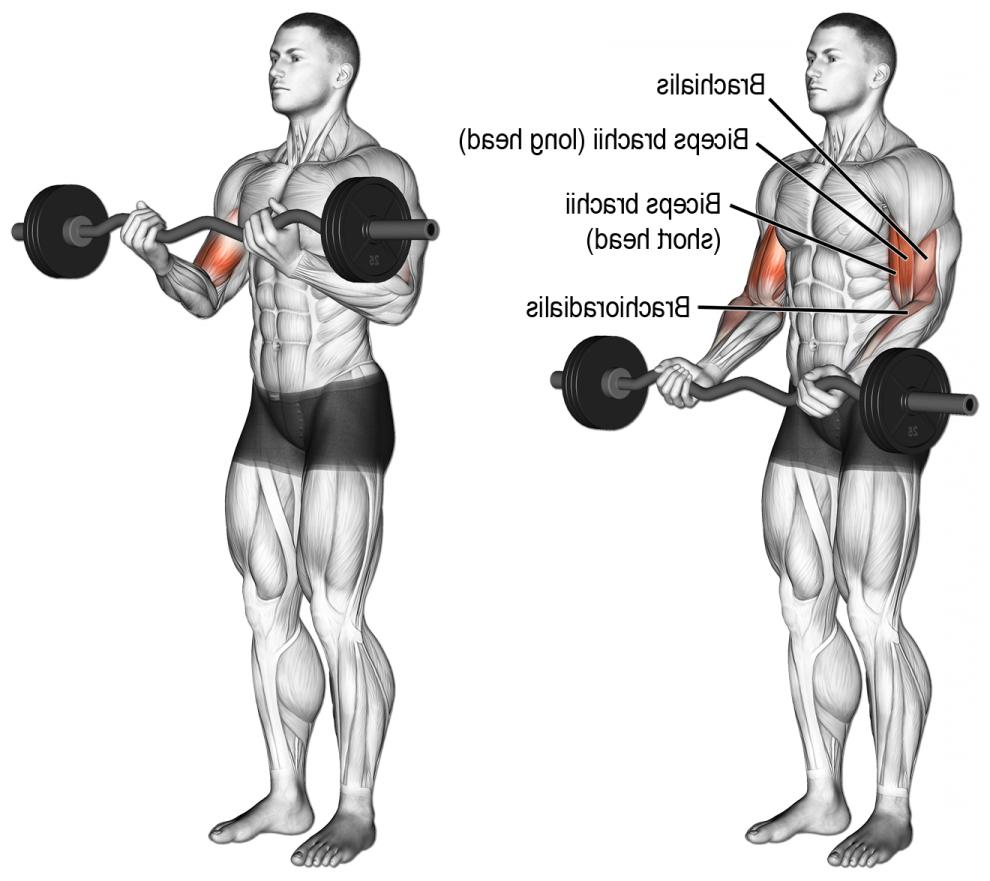 Comment se muscler les triceps avec des haltères ?